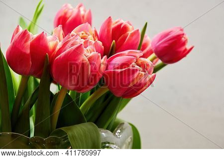 Colourful Bouquet Of Elegant Pink Tulips In The Vase Ready For Celebration. Floral And Herbal Backgr