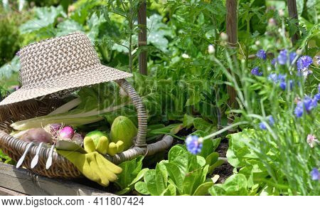 Fresh Vegetable In A Wicker Basket With Wicker Hat Placed In Vegetable Garden