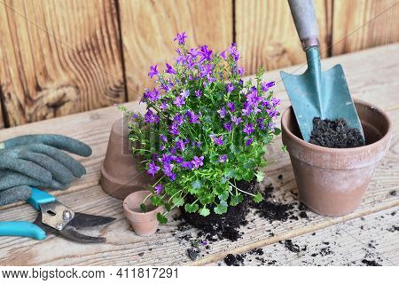 Flowers  Plant And  A Shovel In A Flower Pot Full Of  Dirt  For Potting On A Wooden Table