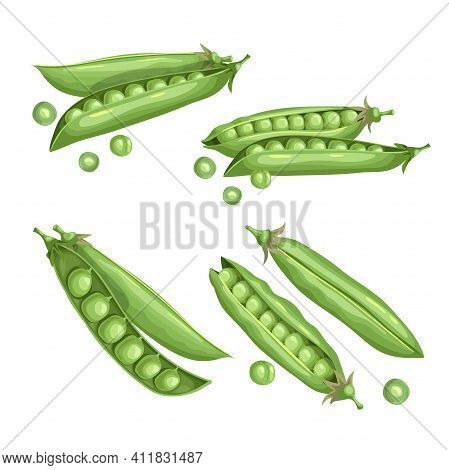 Green Peas Set. Eco Farm Fresh Food. Sweet Green Pea Pods Collection. Closed And Open. Vector Illust