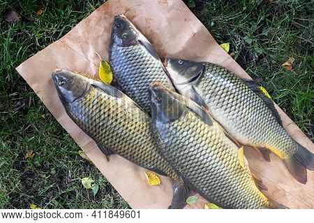 On The Grass On Paper Are Large Fresh Carp Caught In The River. The View From The Top