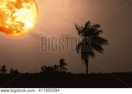 Full Harvest Blood Moon And Silhouette Coconut Tree In The Field And Night Sky