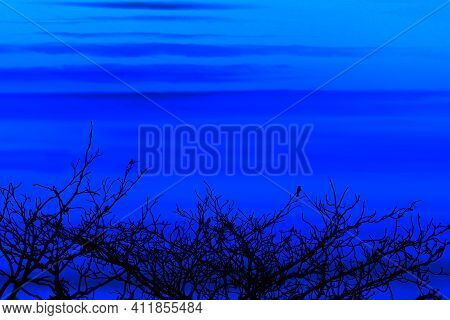 Sunset Back On Silhouette Birds Hanging On Dry Tree Dark Blue Cloud On Sky