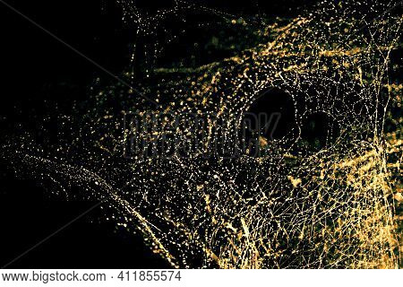 Image Of Blurred Abstract And Art With Bokeh Of Cobweb Light Gold Glow Tone