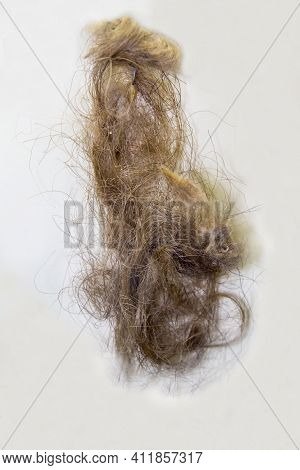 Wool Of The Juribean Mammoth (latin: Mammuthus Primigenius) On A White Background. Paleontology Late