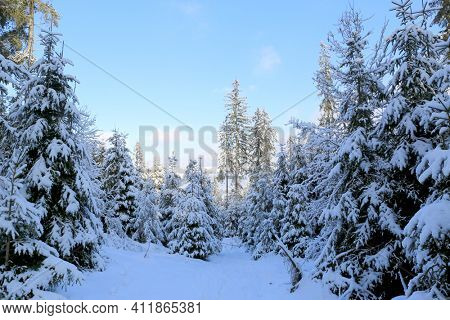 winter landscape in Carpathian mountain forest, Ukraine