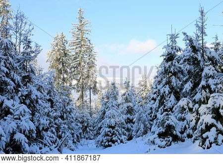 winter scene in Carpathian forest, Ukraine