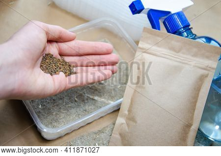 Selective Focus On Hand With Seeds. Kit For Growing Microgreens At Home With Copy Space: Linen Subst