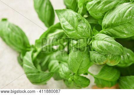 Fresh Basil On A Light Background. Green Basil. Food Background. Lots Of Basil