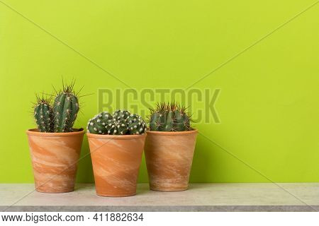 Three potted cactus plants on a shelf in front of vibrant green wall with copy space