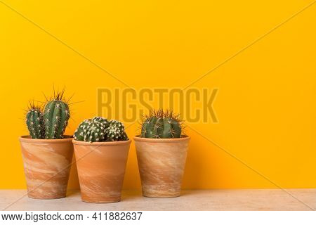 Three cactus plants in clay pots on a shelf with copy space on vibrant yellow background