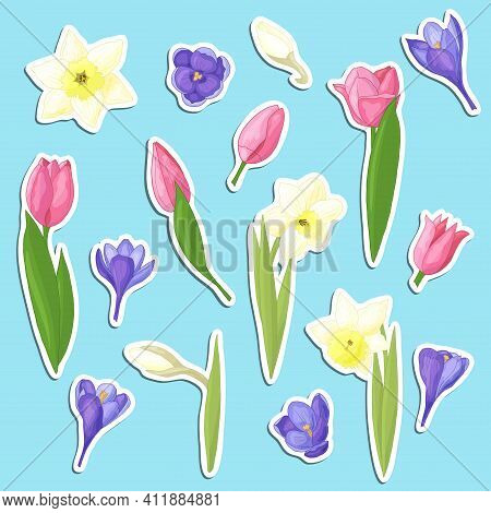 Vector Set Of Stickers With Beautiful Hand-drawn Spring Flowers: Yellow Daffodils, Pink Tulips And P