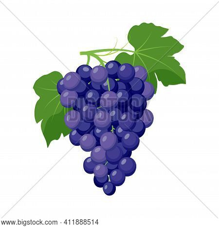 Bunch Of Blue Grapes. Grape Product, Vector Illustration Isolated On White Background.