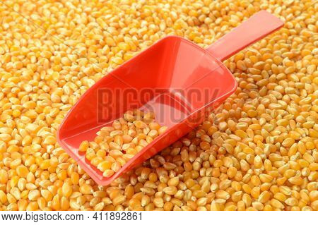 A Red Scoop Rests On A Pile Of Fresh Kernel Corn Being Sold As Wholesale Bulk Product.