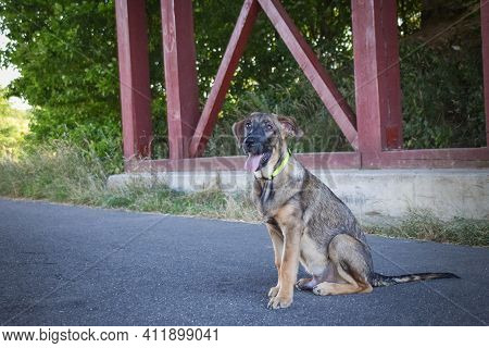 Amazing, Cute, Jung Puppy Of German Shepherd Who Is Playing In Bush.
