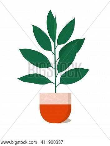 Cute Ficus Plant Isolated On White Background. House Plant In Red Marble Pot.