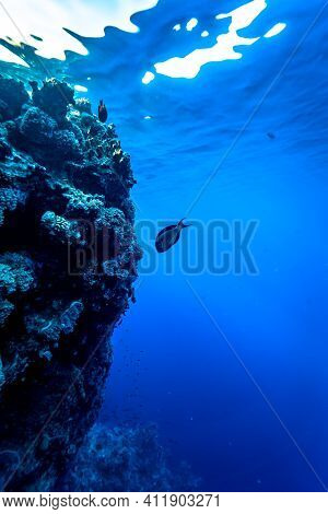 The Deep Blue Water Of The Red Sea.