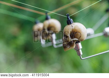 Fishing Adventures,carp Rods With Skull-shaped Bite Indicators Mounted On A Rod By A Lake River.prof