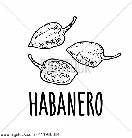 Whole And Half Pepper Habanero. Vector Black Vintage Engraving Isolated