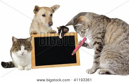 Cat Writing On A Blank Blackboard