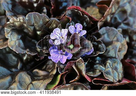 Closeup Of Cluster Of Bugleweed Trumpet Shaped Flowers