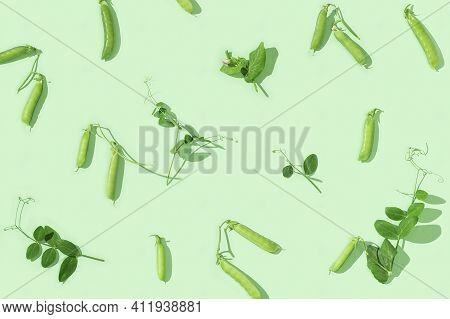 Pods Of Green Peas With Pea Leaves. Organic Healthy Food. Pattern From Fresh Pea.