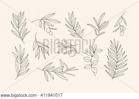 Set Of Leaves And Branch. Outline Palm Leaf And Olive Branch In A Trendy Minimalist Style. Vector Il