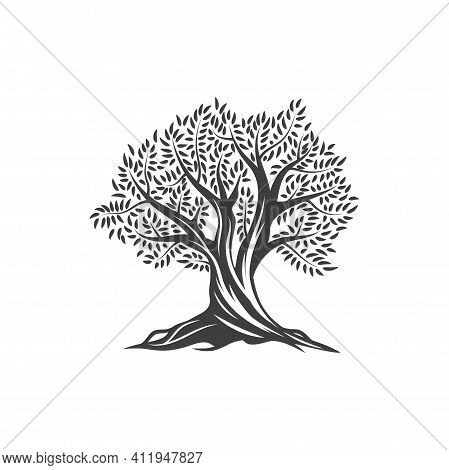 Olive Tree Icon, Olives, Leaves And Branches In Vector Flat Line. Olive Tree Sign For Extra Virgin O