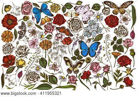 Vector Set Of Hand Drawn Colored Shepherds Purse, Heather, Iris Japonica, Sakura, Gypsophila, Chamom
