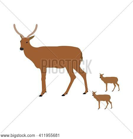 Deer Mother With Two Fauns On Clean White