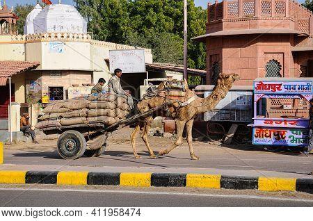 Bikaner, India - Dec 29, 2019: Camel Carts Transporting Goods In Bikaner's Market. Bikaner, Rajastha