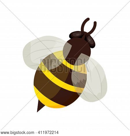 Honey Bee In Cartoon Style Isolated On White Background. Detailed Insect, Bumble, Bug With Stripes.