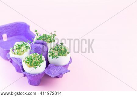 Garden Cress In Eggshell, Purple Paper Egg Holder, On A Pink Background, Horizontal, Copy Space
