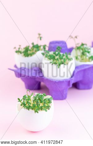 Spring Sprouts, Garden Cress In Eggshell, Purple Paper Egg Holder, On A Pink Background, Vertical, C