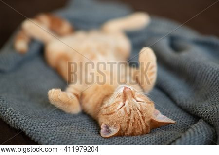Cute funny red tabby kitten sleeps on sofa. Adorable little pet.