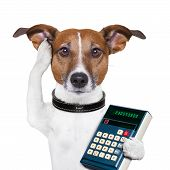 dog accountant thinking and calculating with calculator poster