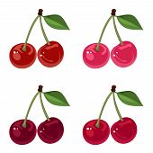 Vector illustration of four bunches of cherries of various colors isolated on a white background. poster
