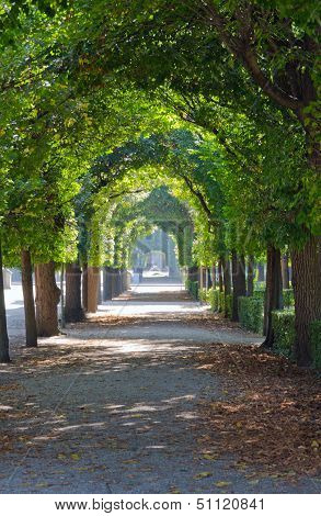 Green tree alley (leaves canopy) in Schoenbrunn Vienna poster