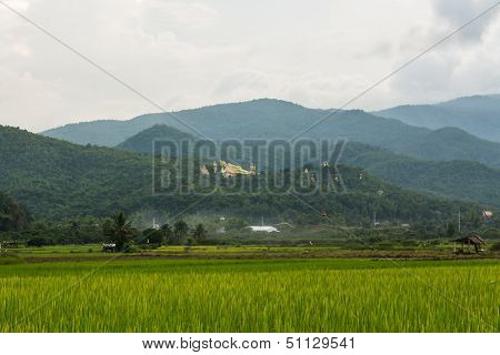 Thai Field And Golden Buddha Big Statue At Wat Mokkanlan In Chomthong , Chiangmai Thailand