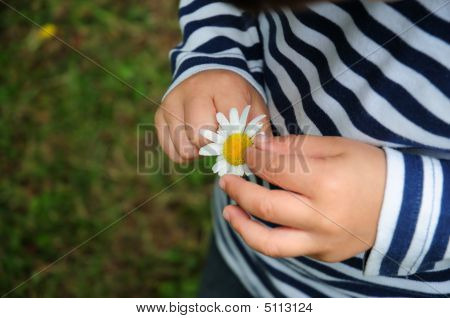 Baby Child Touching Flower