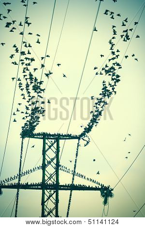 Flock of birds on power lines