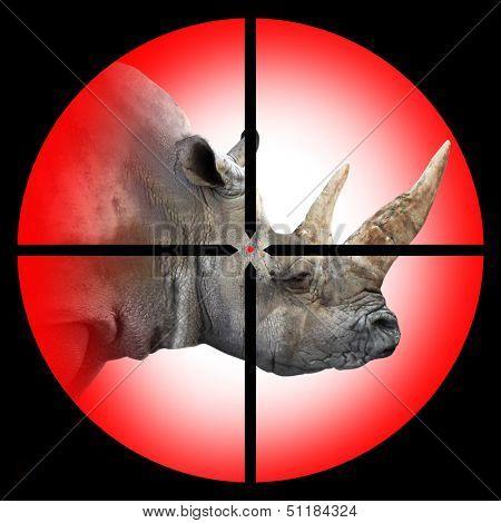 The White Rhinoceros in the Hunter's scope.