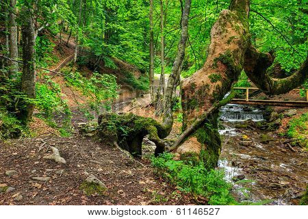 Forest Walks Near River