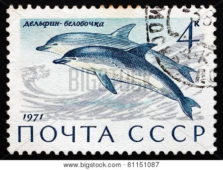 Postage Stamp Russia 1971 Common Dolphins, Sea Mammal