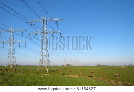 Pollard willows along a power line