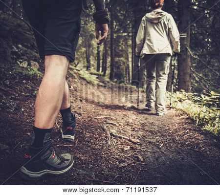 Couple with hiking poles walking in a forest  poster