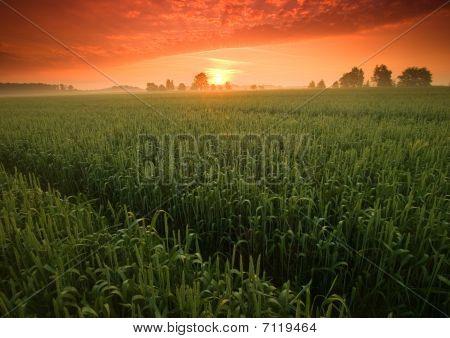 Beatiful and calm sunrise. Colourful landscape.