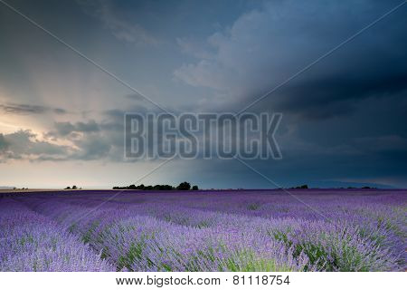 Storm over the lavender field, Provence, France poster