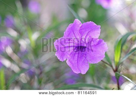 Minnie root flower
