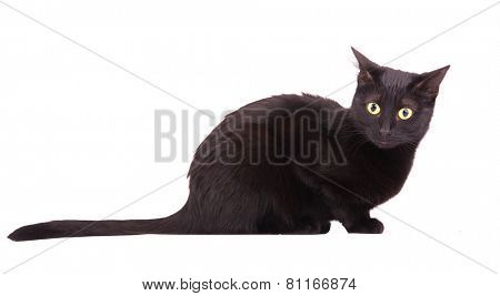 Black cat with a bewildered look on her face, on white
